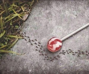 aspartame_lollipop