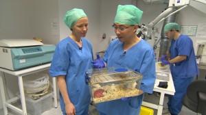 Dr. Chen forsker på Botox mot magekreft